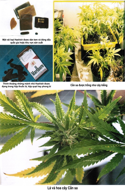 ma túy và các chất gây nghiện